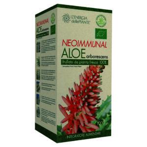 Aloe_arborescens_1000