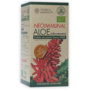 aloe_arborescens_agave