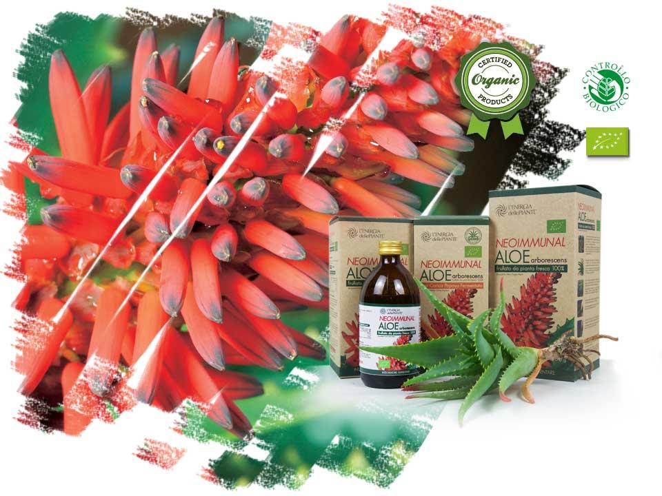 Linea Aloe Arborescens